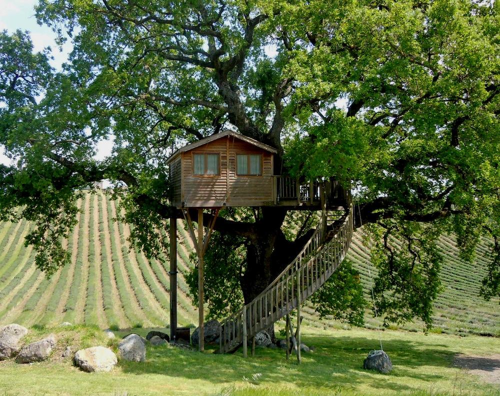 La pi grande casa sull albero d europa a viterbo - Casa sull albero minecraft ...